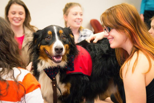 puppy-room-stressed-out-students-university-of-lancashire-7