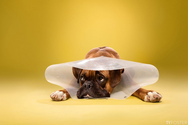 Timeout-Cone-of-shame-portrait-series12__880