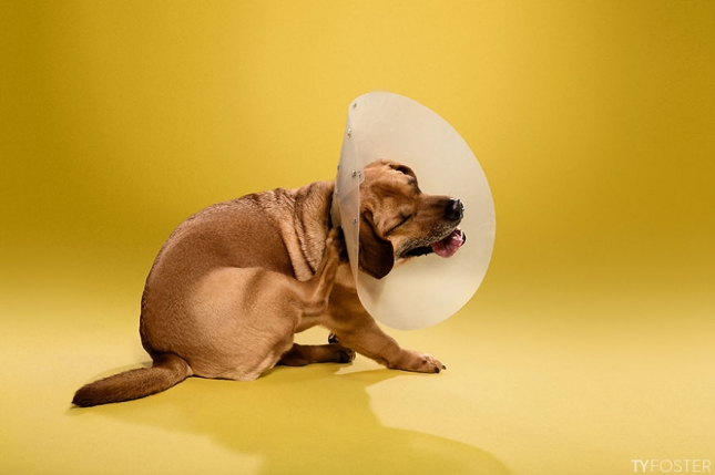 Timeout-Cone-of-shame-portrait-series3__880