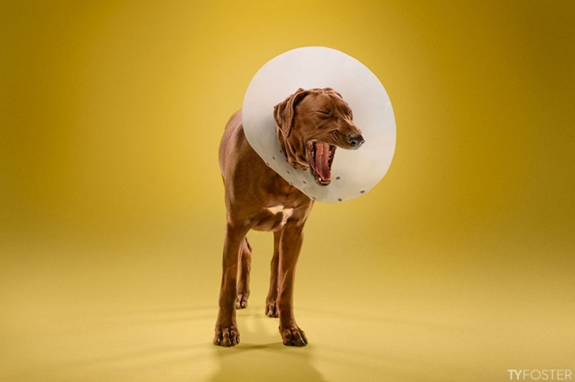 Timeout-Cone-of-shame-portrait-series9__880