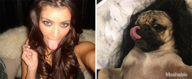 doug-the-pug-recreates-kim-kardashian-selfies-4