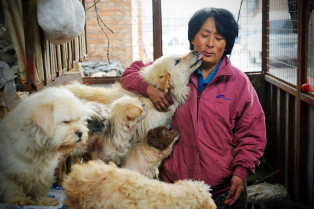 rescued-dogs-yulin-dog-meat-festival-china-12-314x209
