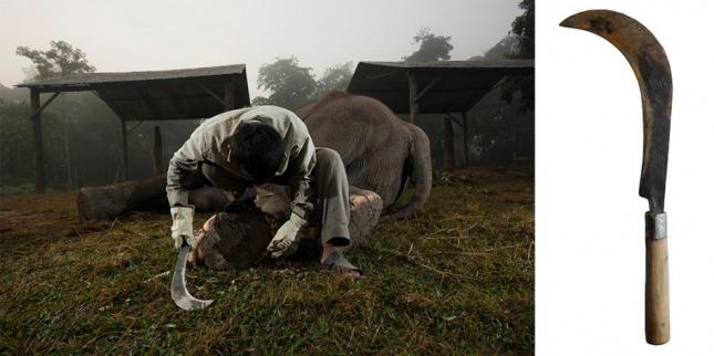 Читван, Непал. Мачете используется для проведения педикюра слонам. Погонщики с помощью мачете срезают со стоп слонов роговые наслоения и пораженные грибком и гнилью ногти. В тех условиях, в которых животные живут в Непале, болезни стоп — норма.