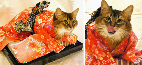 cat-kimonos-japan-1-1