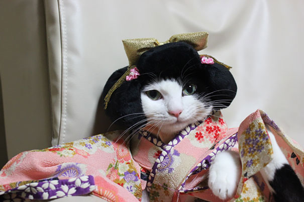 cat-kimonos-japan-10-1