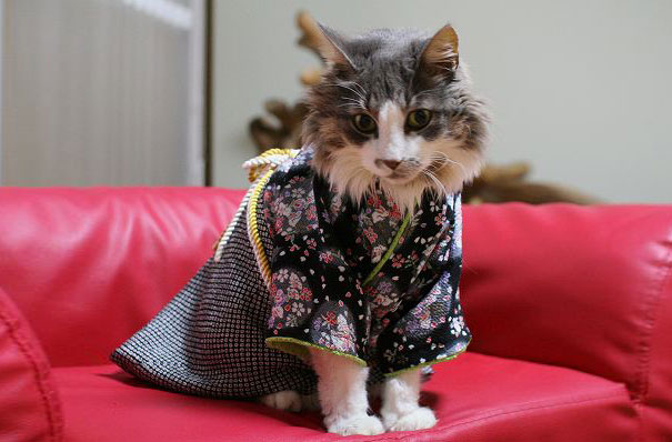 cat-kimonos-japan-13__605