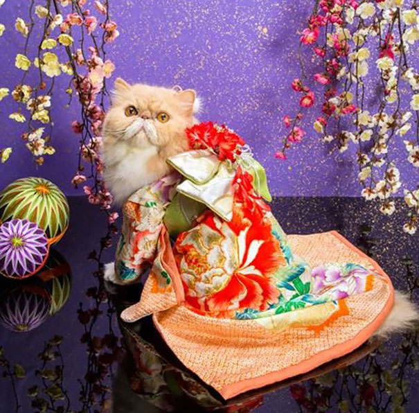 http://vev.ru/wp-content/uploads/2015/07/cat-kimonos-japan-24__605.jpg