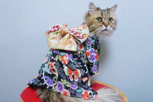 cat-kimonos-japan-41-314x209