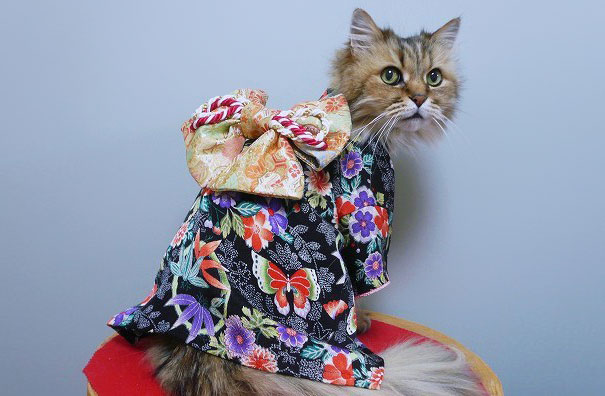 cat-kimonos-japan-41