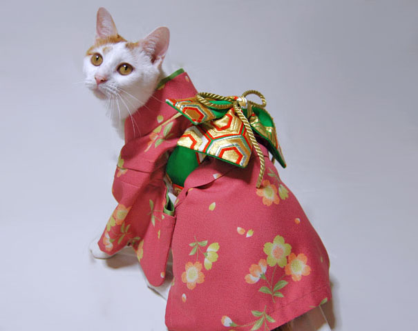 cat-kimonos-japan-7__605
