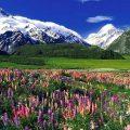Новая Зеландия — 7.2