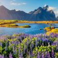 Исландия — 7.5