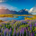 Исландия (ВВП на душу населения: $58 151)
