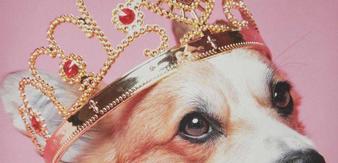 самых дорогих собак в мире — цена и фото