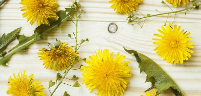желтых цветов, похожих на одуванчики